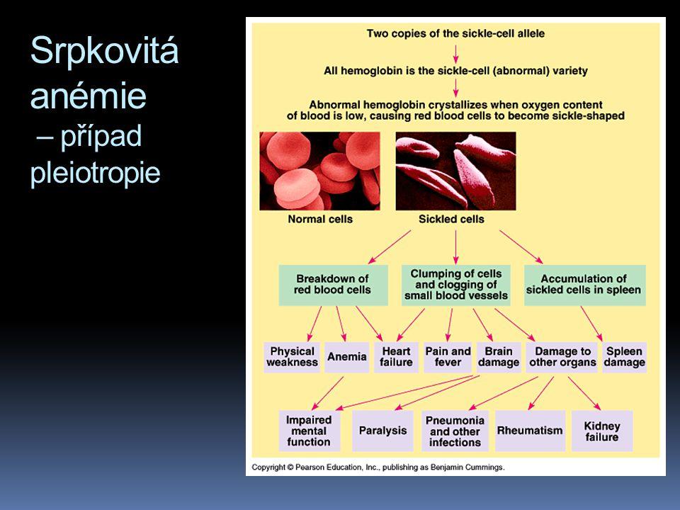 Pleiotropie  Doposud jsme se zabývali případy, kdy jeden gen má jeden účinek na fenotyp organismu. Většina genů se ovšem projeví na fenotypu vícero z