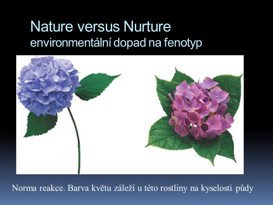 Nature versus Nurture environmentální dopad na fenotyp  v některých případech prostředí nehraje žádnou roli a norma reakce je nulová: dědičnost krevn