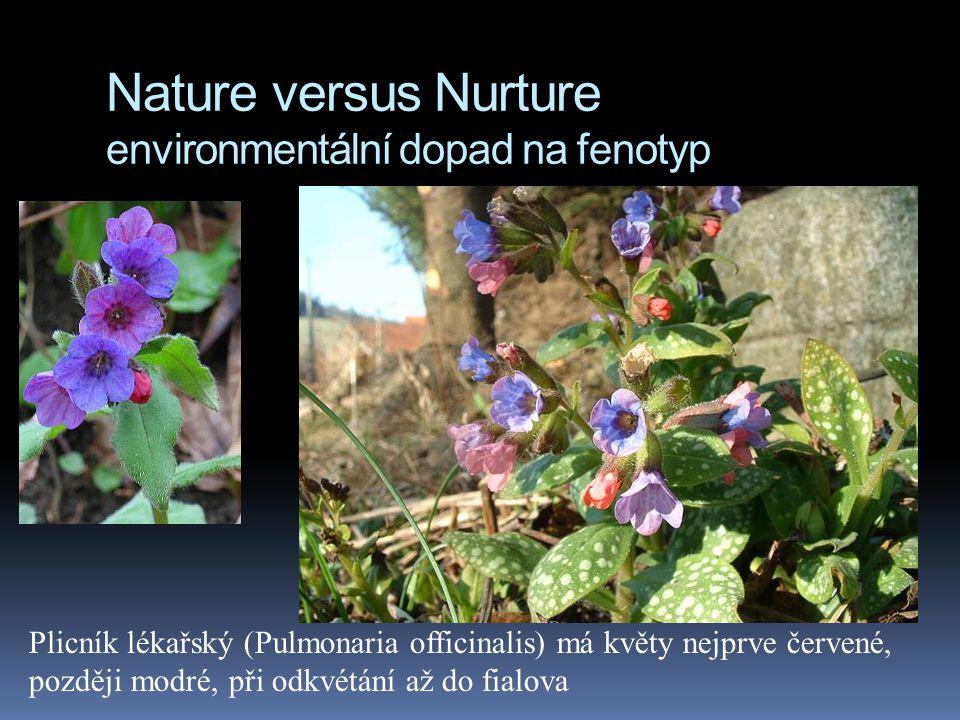 Nature versus Nurture environmentální dopad na fenotyp Norma reakce. Barva květu záleží u této rostliny na kyselosti půdy