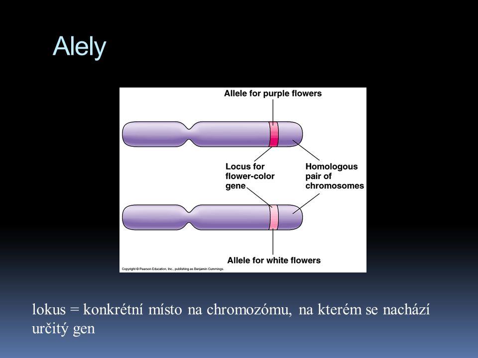 Důležité termíny  Alely = různé varianty téhož genu. Pro jeden gen máme v našem těle dvě alely; jednu jsme zdědili od otce, druhou od matky. Hovoříme