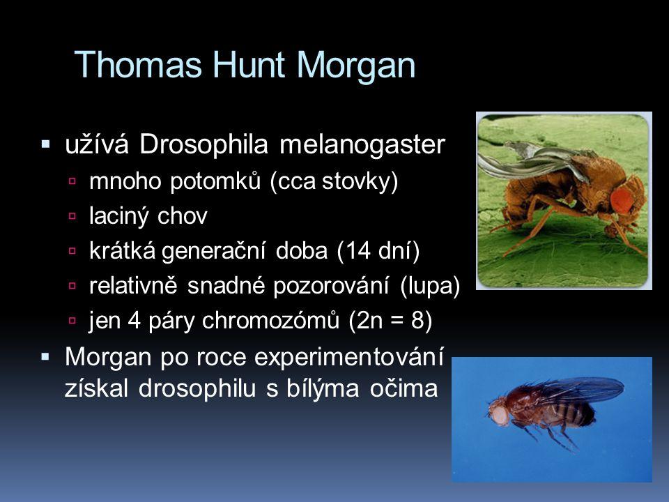 Chromozomální teorie dědičnosti = snaha spojit cytologii s Mendelovou dědičností