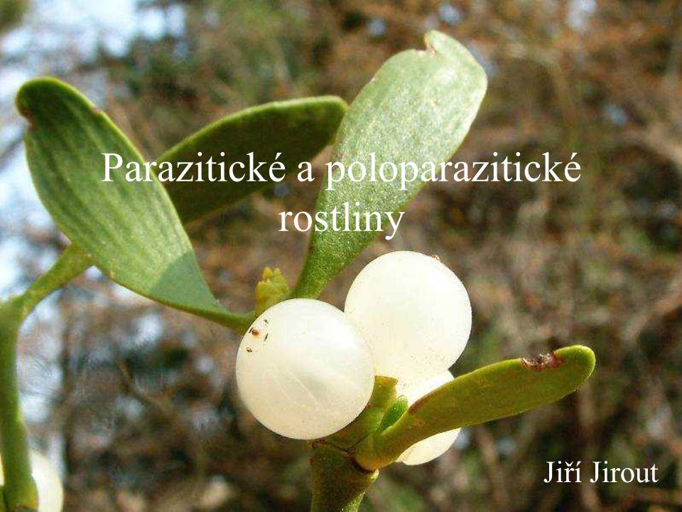 Krtičníkovité (Scrophulariaceae) asi 2600 druhů, +/- parazitních - hostiteli jsou především luční rostliny, trávy, jetel, brukvovité, makovité, truskavec, vikev, čirok, aj.