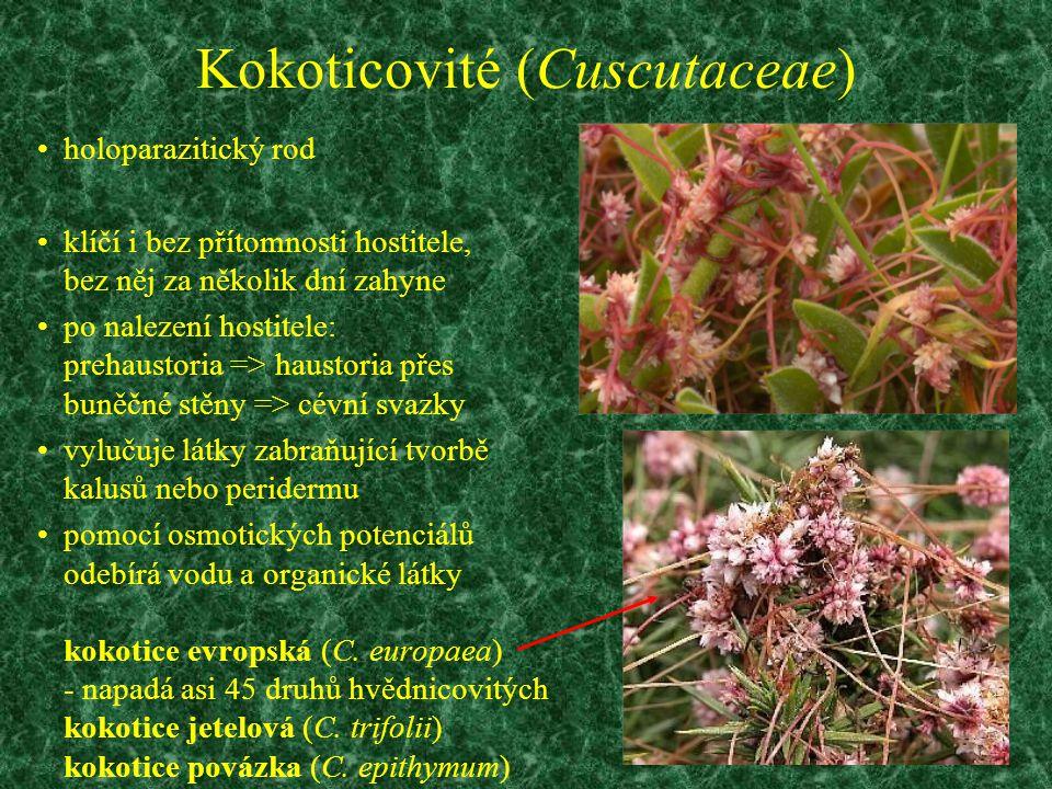 Kokoticovité (Cuscutaceae) holoparazitický rod klíčí i bez přítomnosti hostitele, bez něj za několik dní zahyne po nalezení hostitele: prehaustoria =>