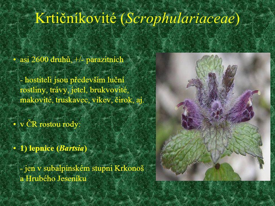 Krtičníkovité (Scrophulariaceae) asi 2600 druhů, +/- parazitních - hostiteli jsou především luční rostliny, trávy, jetel, brukvovité, makovité, truska