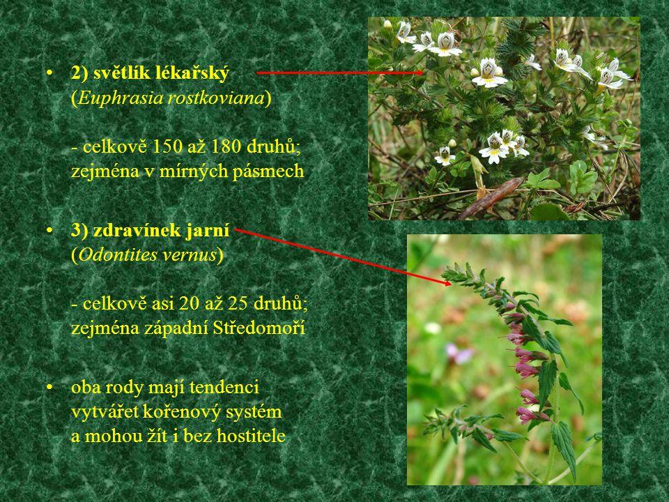 2) světlík lékařský (Euphrasia rostkoviana) - celkově 150 až 180 druhů; zejména v mírných pásmech 3) zdravínek jarní (Odontites vernus) - celkově asi