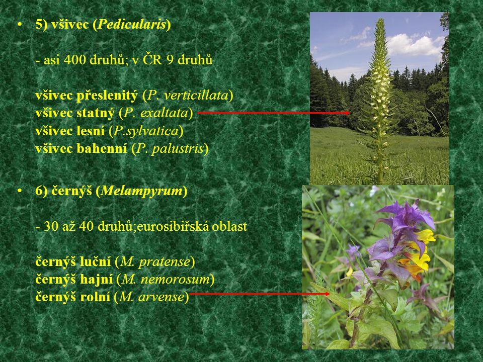 5) všivec (Pedicularis) - asi 400 druhů; v ČR 9 druhů všivec přeslenitý (P. verticillata) všivec statný (P. exaltata) všivec lesní (P.sylvatica) všive