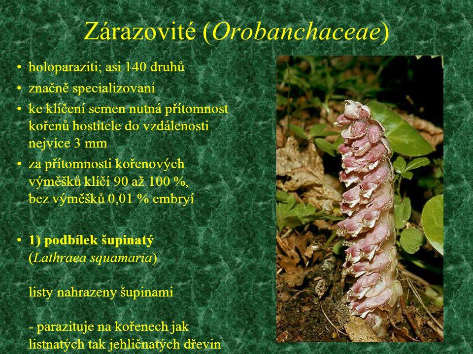 Zárazovité (Orobanchaceae) holoparaziti; asi 140 druhů značně specializovaní ke klíčení semen nutná přítomnost kořenů hostitele do vzdálenosti nejvíce