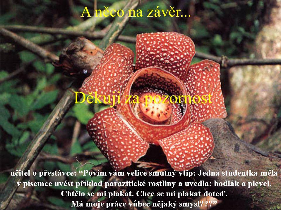"""učitel o přestávce: """"Povím vám velice smutný vtip: Jedna studentka měla v písemce uvést příklad parazitické rostliny a uvedla: bodlák a plevel. Chtělo"""