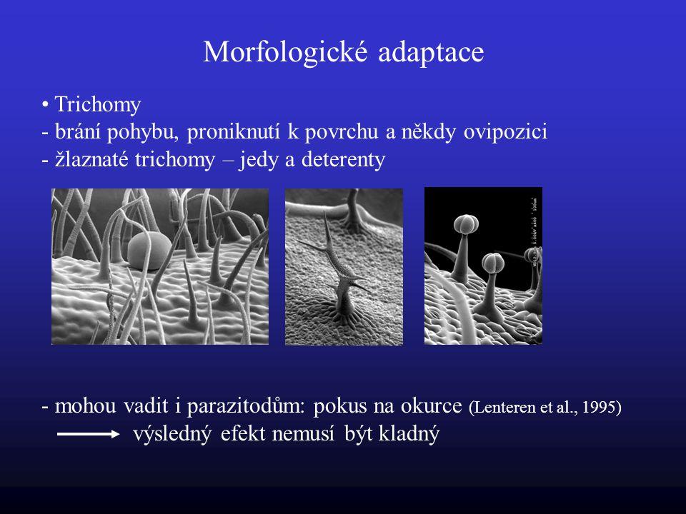 Morfologické adaptace Trichomy - brání pohybu, proniknutí k povrchu a někdy ovipozici - žlaznaté trichomy – jedy a deterenty - mohou vadit i parazitodům: pokus na okurce (Lenteren et al., 1995) výsledný efekt nemusí být kladný