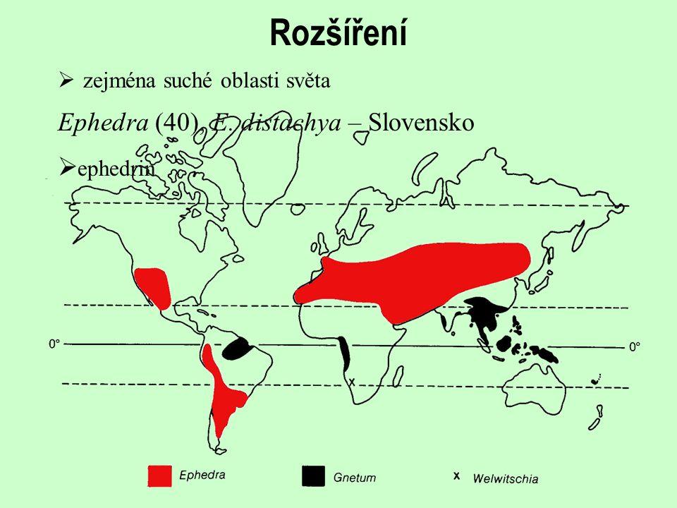 Rozšíření  zejména suché oblasti světa  ephedrin Ephedra (40), E. distachya – Slovensko