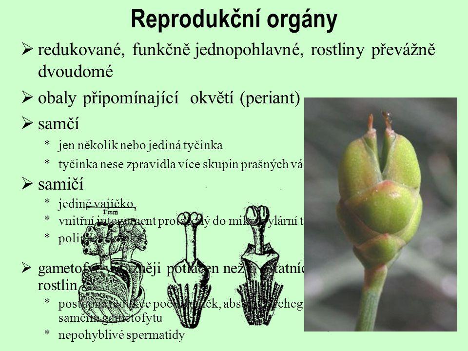 Reprodukční orgány  redukované, funkčně jednopohlavné, rostliny převážně dvoudomé  obaly připomínající okvětí (periant)  samčí *jen několik nebo je