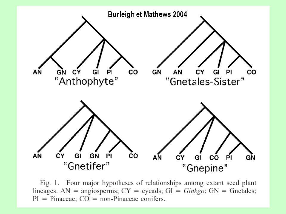 Burleigh et Mathews 2004