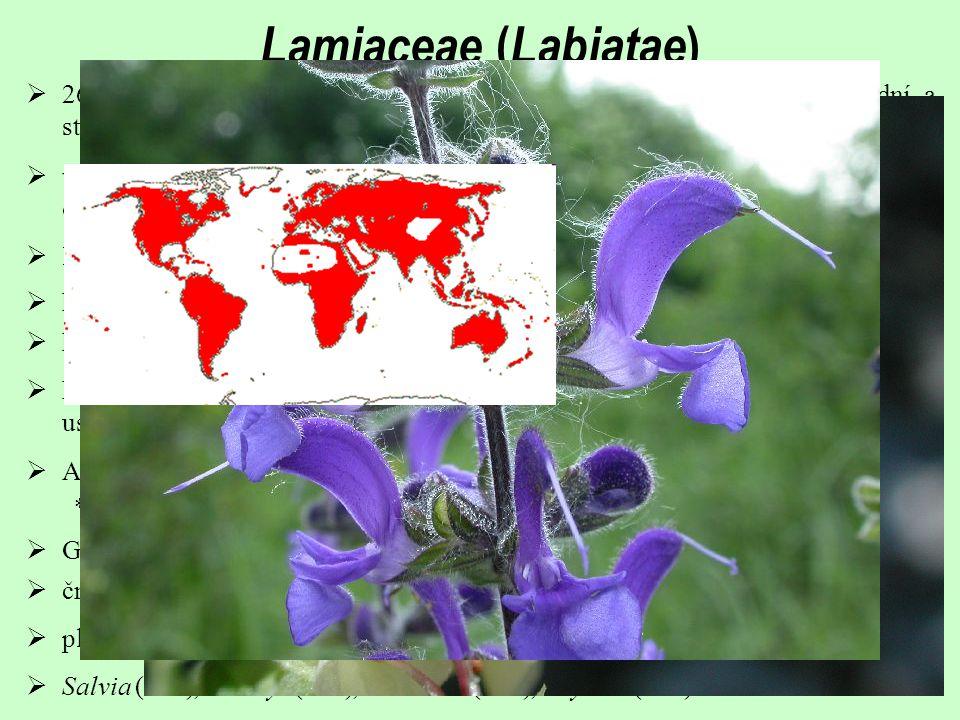  lodyha čtyřhranná; listy téměř vždy vstřícné, křižmostojné  velmi různorodé – polokeře, keře a byliny; často aromatické (žlázky s éterickými oleji na povrchu rostliny)  hlavní květenství otevřená, boční ukončená – lichopřesleny  K (5) často dvoupyský; C (5) horní pysk ze 2, spodní ze 3 petalů (výjimečně jiné uspořádání)  260/7000; zvláště suché oblasti (vývojové centrum ve Středozemí a přední a střední Asii)  květy silně zygomorfní (pyskaté),  A 4 (v mediáně chybí), 1 pár delší; přirostlé ke koruně; *Salvia a Rosmarinus - přítomné a fertilní jen spodní tyčinky  G(2), svrchní; v semeníku falešné přehrádky  čnělka často gynobazická a rozvětvená  plody často tvrdky  Salvia (800), Stachys (300), Teucrium (200), Thymus (350)