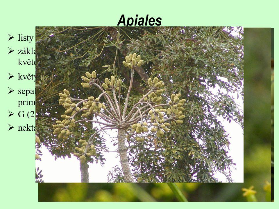 Apiales  listy střídavé, ve spirále, často složené; řapíky často pochvaté  sepaly značně redukované; petaly volné, ale vyvíjejí se z kruhového primo