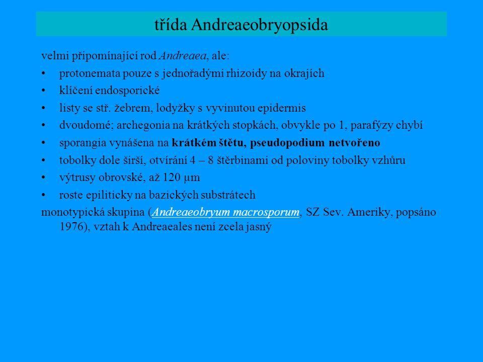 Tetraphidaceae: morfologie a anatomie a-h: Tetraphis pellucida i-j: Tetrodontium repandum