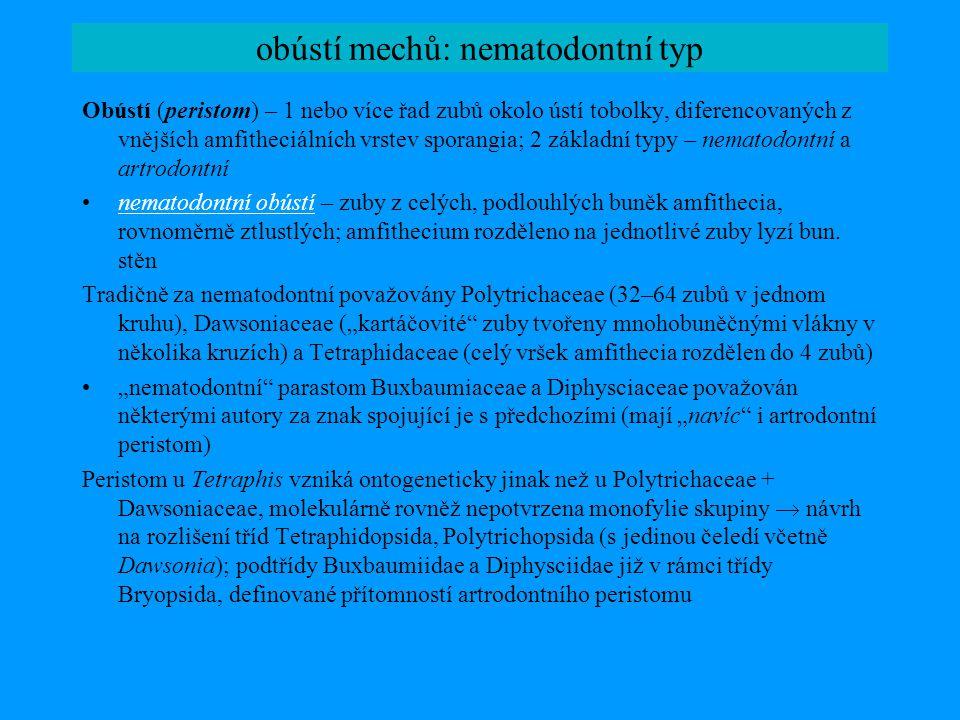 třída Tetraphidopsida protonema: vláknité chloronema, na kterém se tvoří ploché přívěsky (kaulonema), někdy vytrvávající (Tetrodontium)protonema gametofory: téměř úplně redukované (Tetrodontium; někdy pouze perichaetia a perigonia) nebo menší vzpřímené lodyžky s vejčitými listy (Tetraphis), nediferencované isodiametrické buňky, jednoduché střední žebro; meziroční změna pohlaví gametoforů, pokud archegonia neoplozenágametofory tvorba čočkovitých gem v pohárcích na koncích lodyžek štět se svazkem vod.