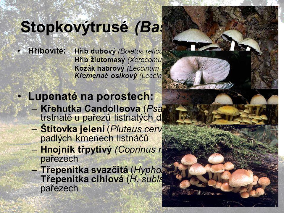 Stopkovýtrusé (Basidiomycetes) Hřibovité: Hřib dubový (Boletus reticulatus) Hřib žlutomasý (Xerocomus chrysenteron) Kozák habrový (Leccinum pseudoscabrum) Křemenáč osikový (Leccinum aurantiacum), atd.