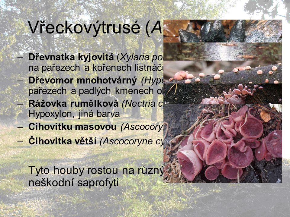 Vřeckovýtrusé (Ascomycetes) –Dřevnatka kyjovitá (Xylaria polymorpha): ve skupinkách na pařezech a kořenech listnáčů –Dřevomor mnohotvárný (Hypoxylon multiforme): na pařezech a padlých kmenech olší –Rážovka rumělková (Nectria cinnabarina): jako Hypoxylon, jiná barva –Cihovitku masovou (Ascocoryne sarcoides) –Čihovitka větší (Ascocoryne cylichnium) Tyto houby rostou na různých dřevinách jako neškodní saprofyti