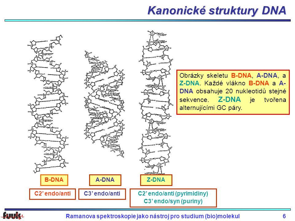 Ramanova spektroskopie jako nástroj pro studium (bio)molekul6 C2' endo/antiC3' endo/antiC2' endo/anti (pyrimidiny) C3' endo/syn (puriny) B-DNAA-DNAZ-DNA Obrázky skeletu B-DNA, A-DNA, a Z-DNA.