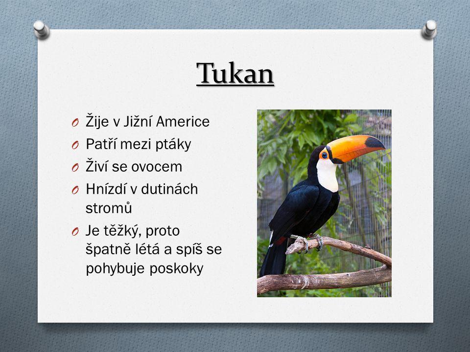 Tukan O Žije v Jižní Americe O Patří mezi ptáky O Živí se ovocem O Hnízdí v dutinách stromů O Je těžký, proto špatně létá a spíš se pohybuje poskoky