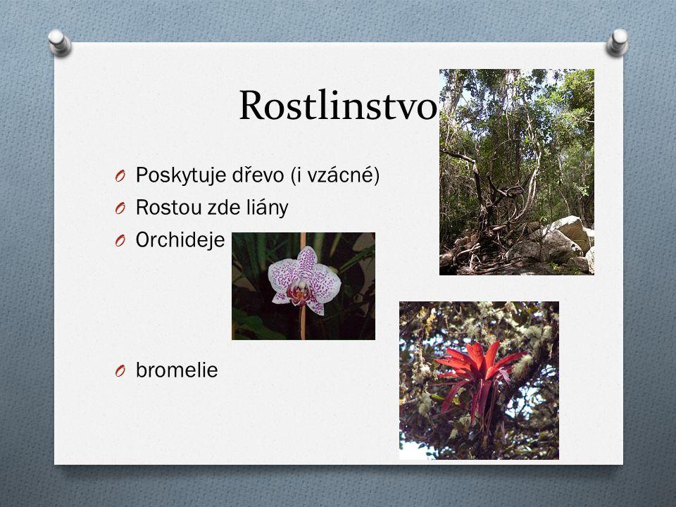 Rostlinstvo O Poskytuje dřevo (i vzácné) O Rostou zde liány O Orchideje O bromelie