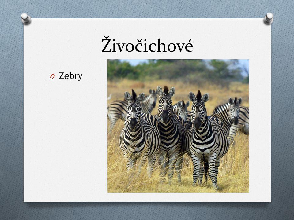 Živočichové O Zebry