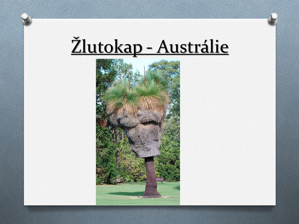 Žlutokap - Austrálie