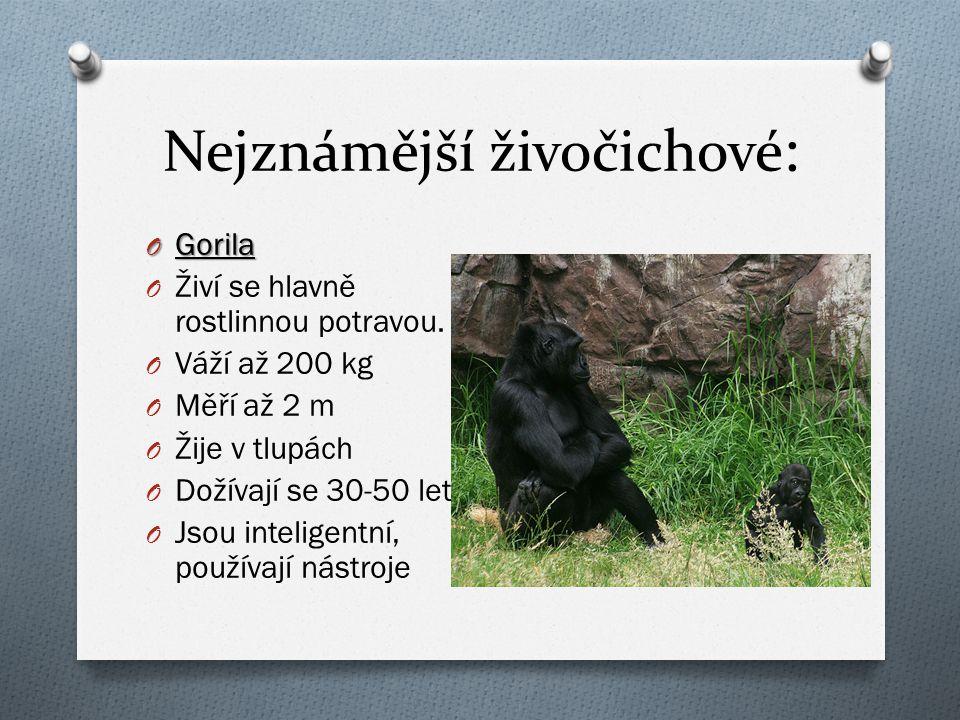 Nejznámější živočichové : O Gorila O Živí se hlavně rostlinnou potravou. O Váží až 200 kg O Měří až 2 m O Žije v tlupách O Dožívají se 30-50 let O Jso