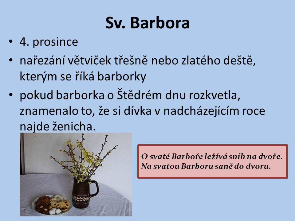 Sv. Barbora 4. prosince nařezání větviček třešně nebo zlatého deště, kterým se říká barborky pokud barborka o Štědrém dnu rozkvetla, znamenalo to, že