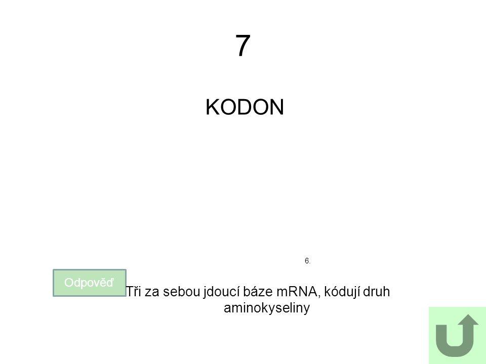 7 KODON Odpověď Tři za sebou jdoucí báze mRNA, kódují druh aminokyseliny 6.