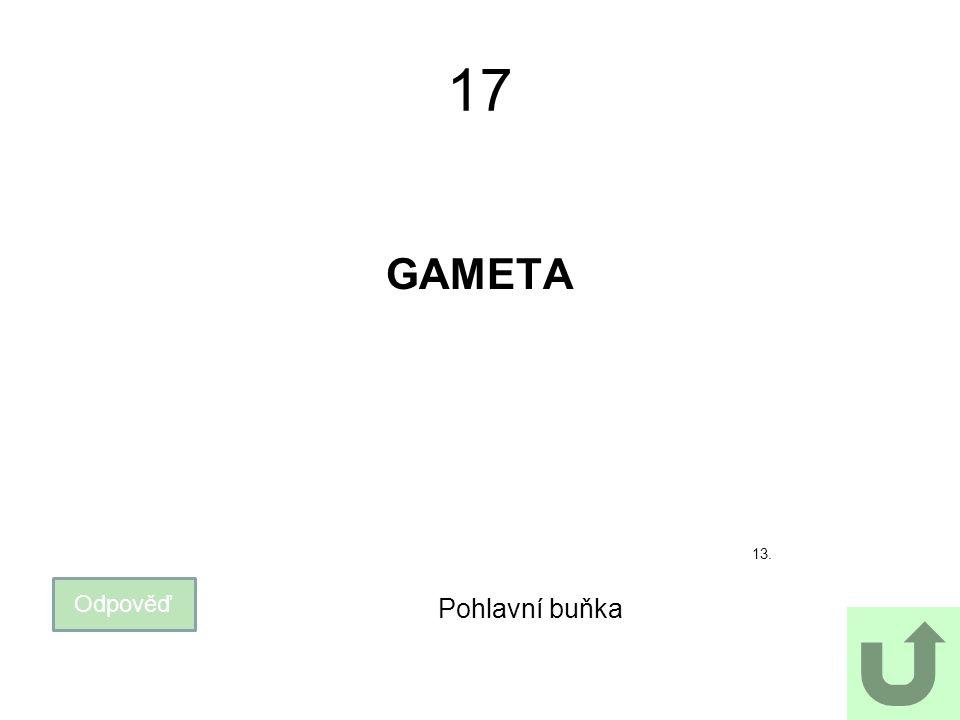 17 GAMETA 13. Odpověď Pohlavní buňka