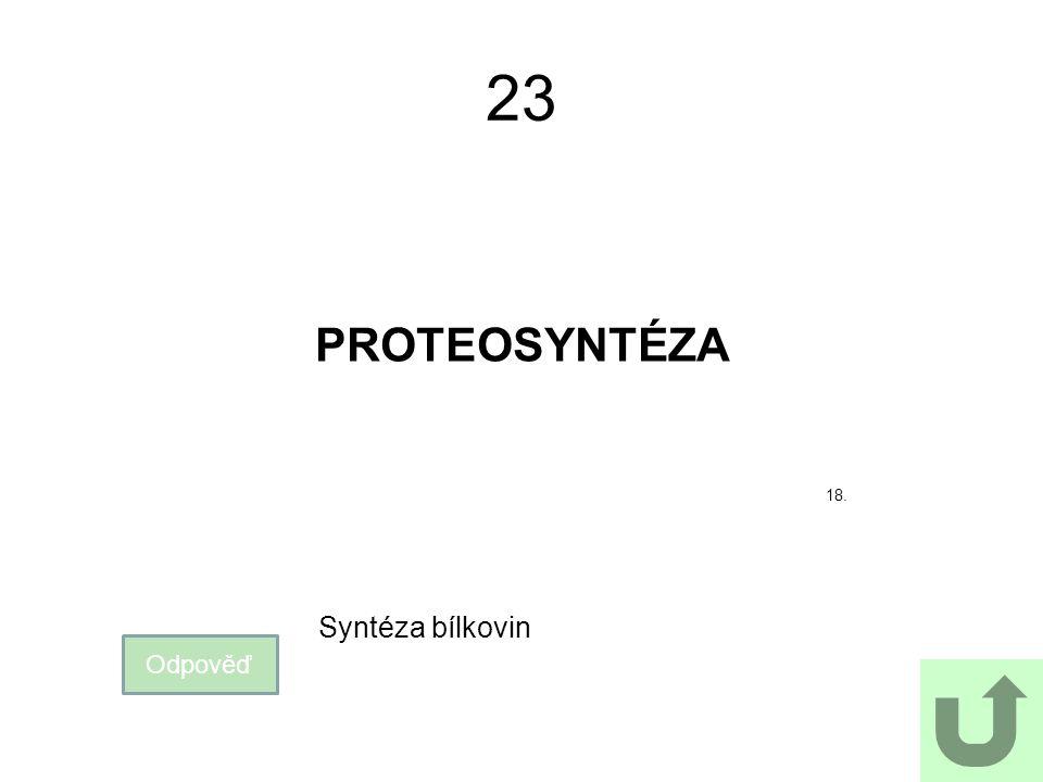 23 PROTEOSYNTÉZA Odpověď Syntéza bílkovin 18.