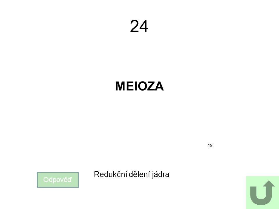 24 MEIOZA Odpověď Redukční dělení jádra 19.