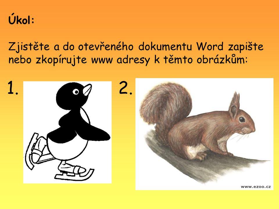 3. Nápověda: Lyska černá
