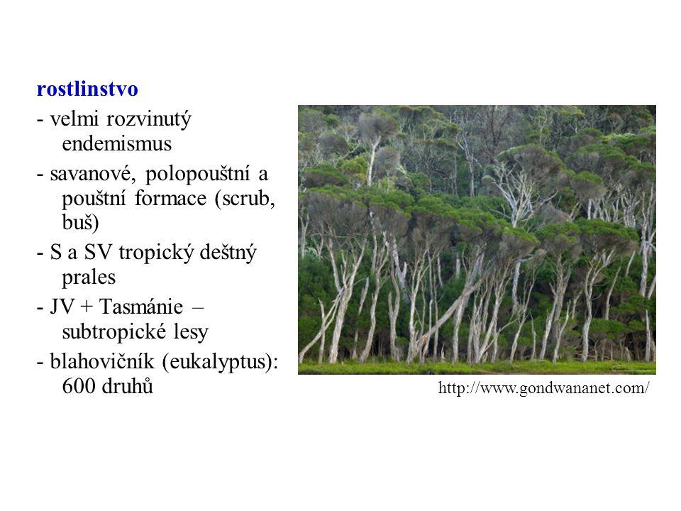 rostlinstvo - velmi rozvinutý endemismus - savanové, polopouštní a pouštní formace (scrub, buš) - S a SV tropický deštný prales - JV + Tasmánie – subt