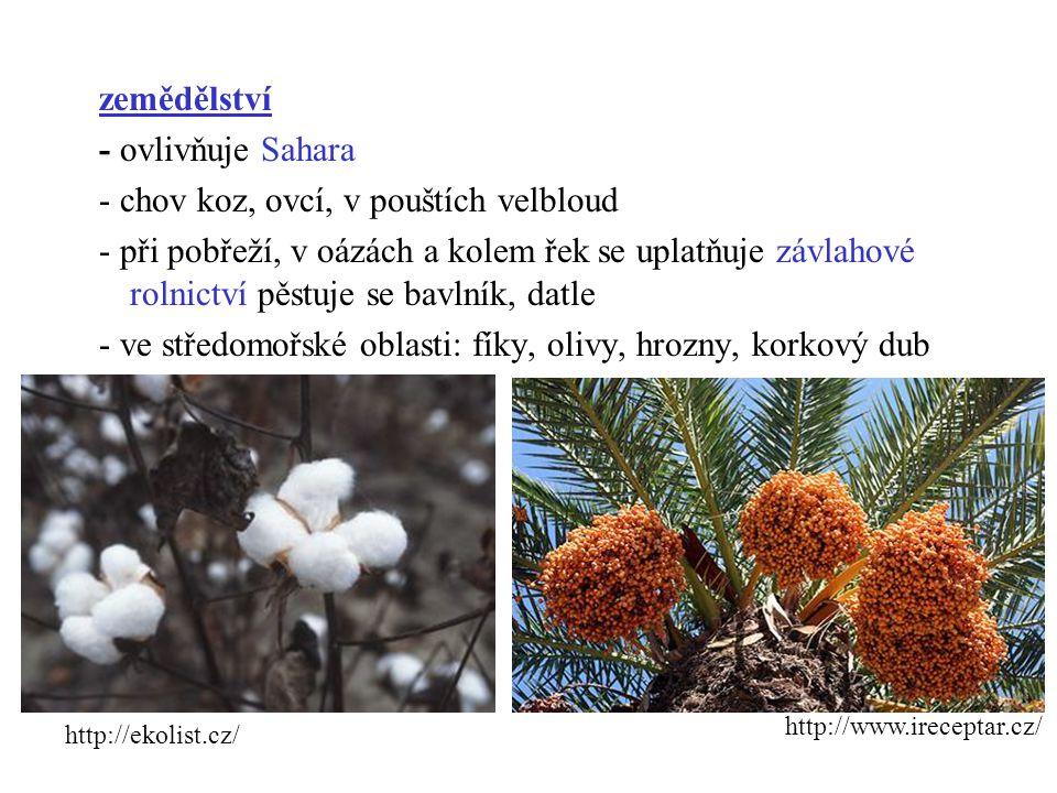 zemědělství - ovlivňuje Sahara - chov koz, ovcí, v pouštích velbloud - při pobřeží, v oázách a kolem řek se uplatňuje závlahové rolnictví pěstuje se b