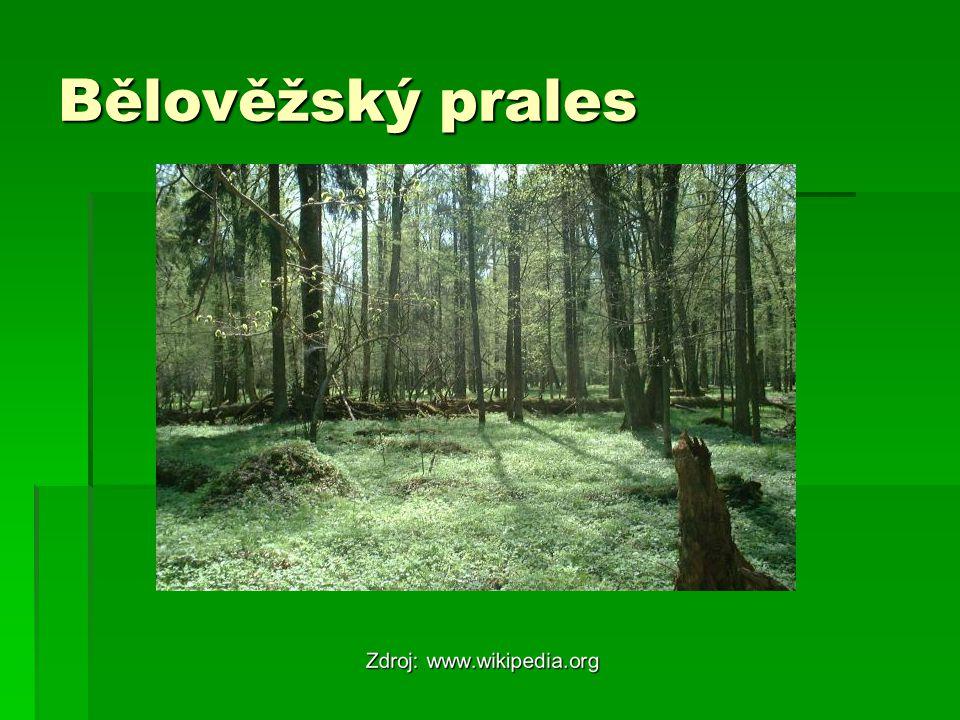 Obyvatelstvo  80% - Bělorusové  Menšiny Rusů a Poláků  Během války zemřela ¼ obyvatel země  SDŽ 65 a 75,5  Urbanizace – 70%