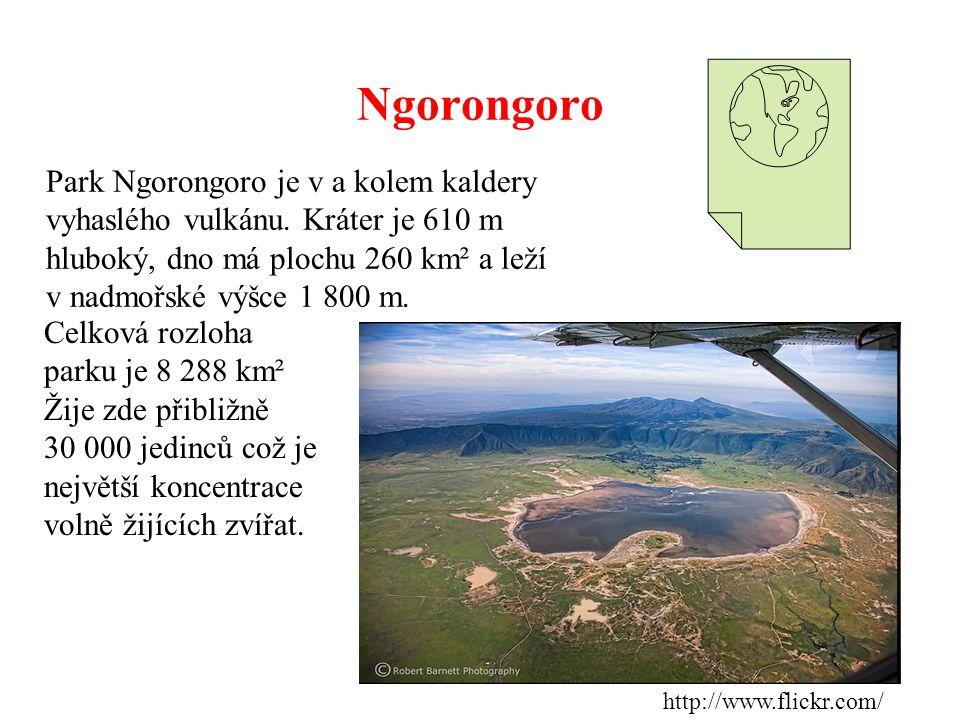 Ngorongoro Park Ngorongoro je v a kolem kaldery vyhaslého vulkánu. Kráter je 610 m hluboký, dno má plochu 260 km² a leží v nadmořské výšce 1 800 m. ht