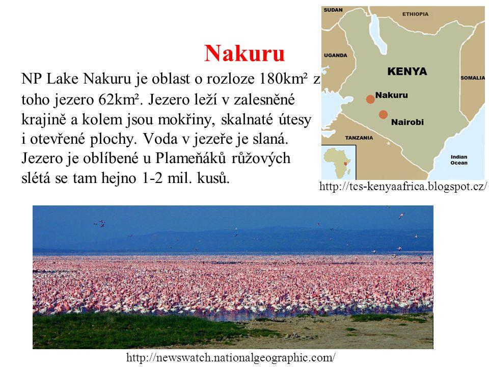 Nakuru NP Lake Nakuru je oblast o rozloze 180km² z toho jezero 62km². Jezero leží v zalesněné krajině a kolem jsou mokřiny, skalnaté útesy i otevřené