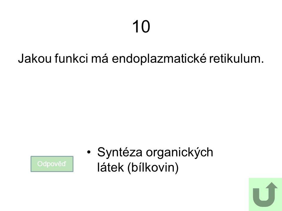 10 Jakou funkci má endoplazmatické retikulum. Odpověď Syntéza organických látek (bílkovin)