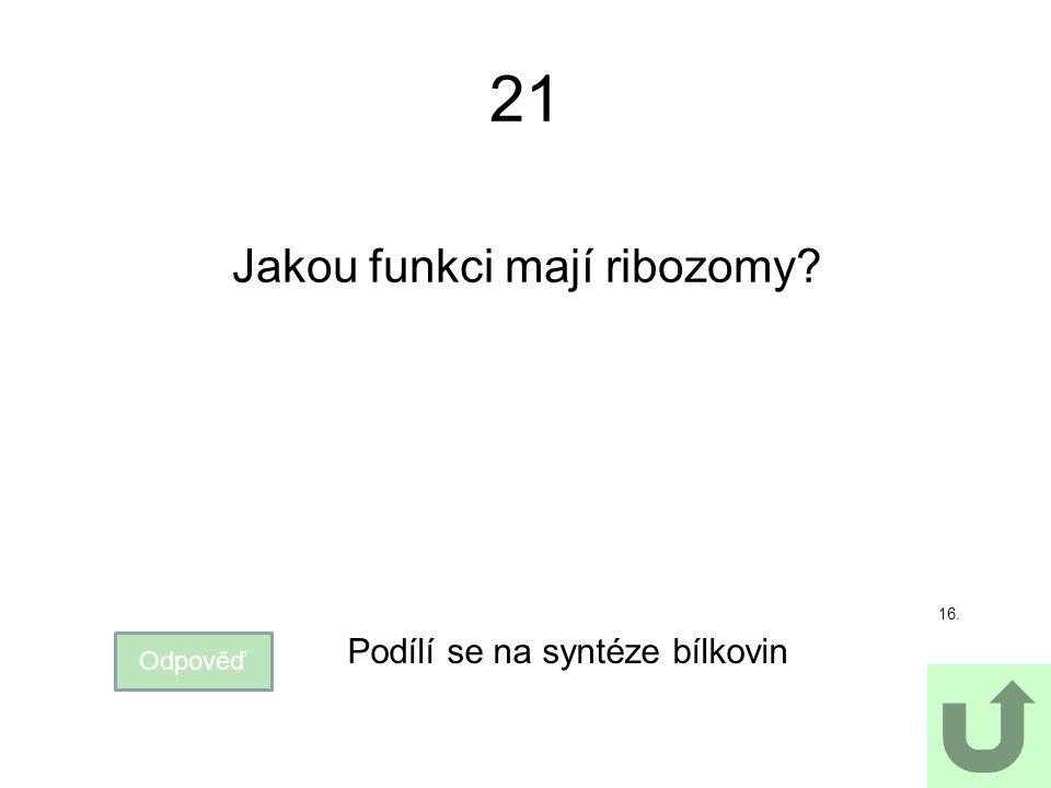 21 Jakou funkci mají ribozomy? Odpověď Podílí se na syntéze bílkovin 16.
