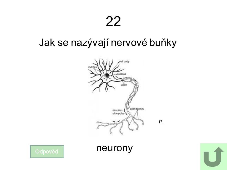 22 Jak se nazývají nervové buňky Odpověď neurony 17.