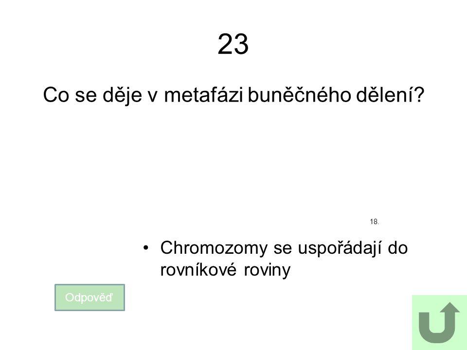 23 Co se děje v metafázi buněčného dělení? Odpověď Chromozomy se uspořádají do rovníkové roviny 18.