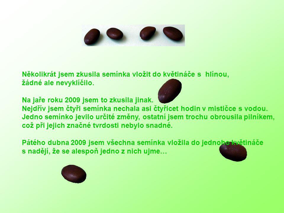 4.den Je zrovna Zelený čtvrtek před Velikonocemi a nejaktivnější semínko o sobě dává vědět.