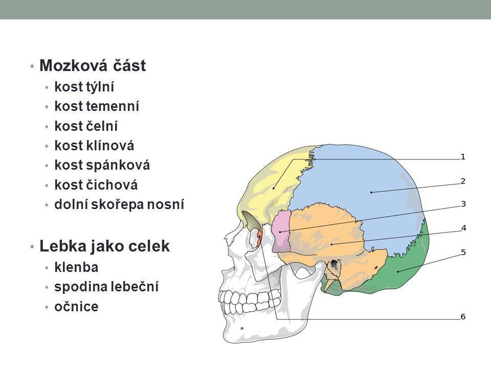 Mozková část kost týlní kost temenní kost čelní kost klínová kost spánková kost čichová dolní skořepa nosní Lebka jako celek klenba spodina lebeční oč
