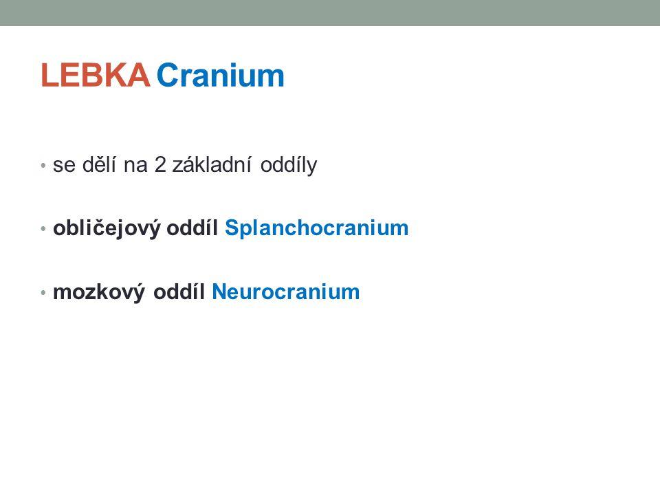 LEBKA Cranium se dělí na 2 základní oddíly obličejový oddíl Splanchocranium mozkový oddíl Neurocranium