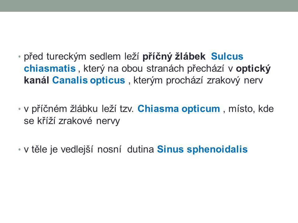 před tureckým sedlem leží příčný žlábek Sulcus chiasmatis, který na obou stranách přechází v optický kanál Canalis opticus, kterým prochází zrakový ne