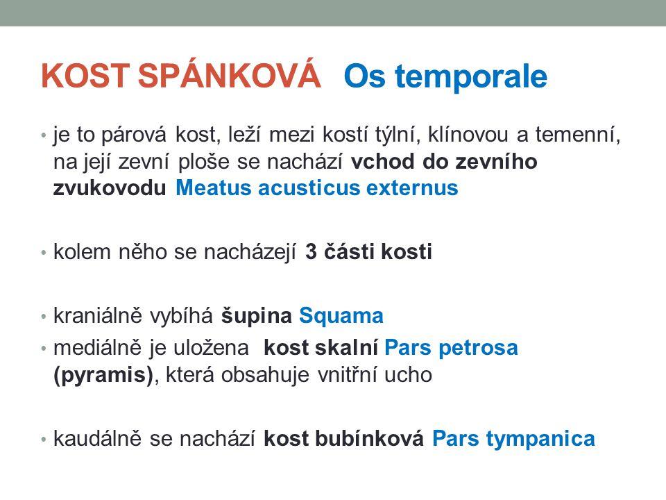 ZDROJE: Dylevský,I., Somatologie: Učebnice pro zdravotnické školy a bakalářské studium, druhé, Epava, Olomouc, 2000 ANATOMIST90.