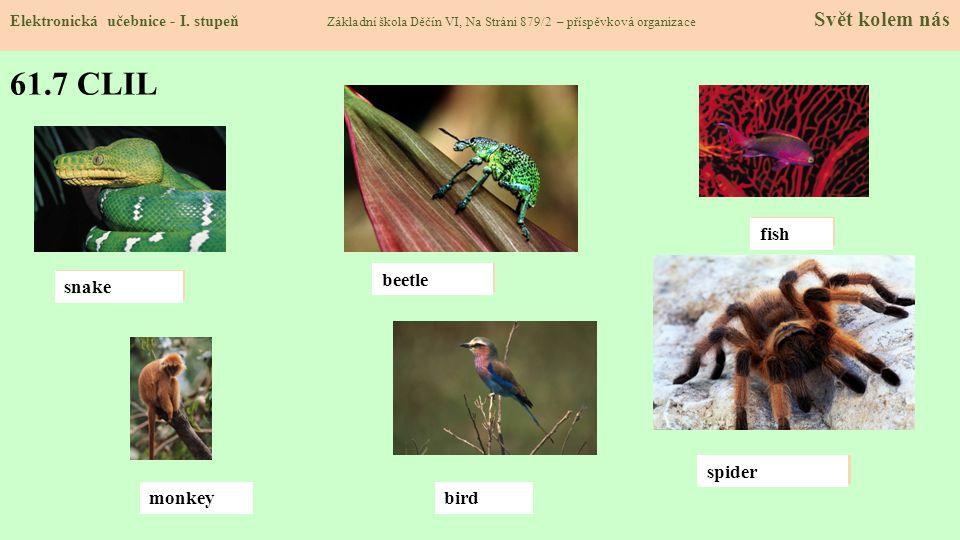 61.7 CLIL Elektronická učebnice - I. stupeň Základní škola Děčín VI, Na Stráni 879/2 – příspěvková organizace Svět kolem nás snake beatle monkey fish