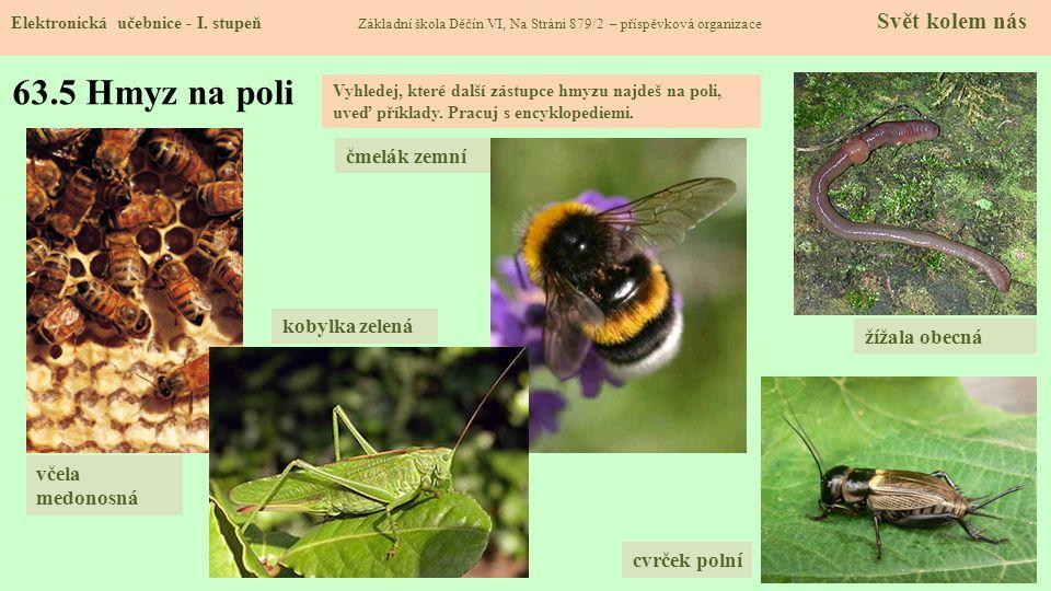 63.6 Včela medonosná Elektronická učebnice - I.